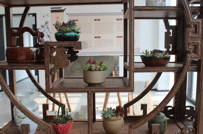 小小园艺师们上线了!多肉植物DIY 巧手扮靓文化礼堂